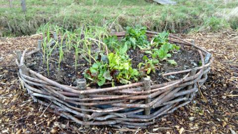 wicker raised bed with veg